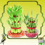 Send Ugadi Special Online Gifts to india Special Lucky Plants