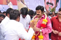 Balakrishna 2013 Birthday Celebrations