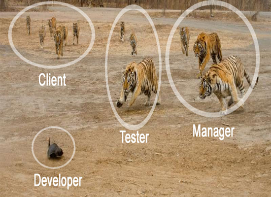 Life Of A Software Developer Funny Animal Pictures