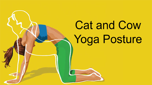 Cat and Cow Yoga Posture