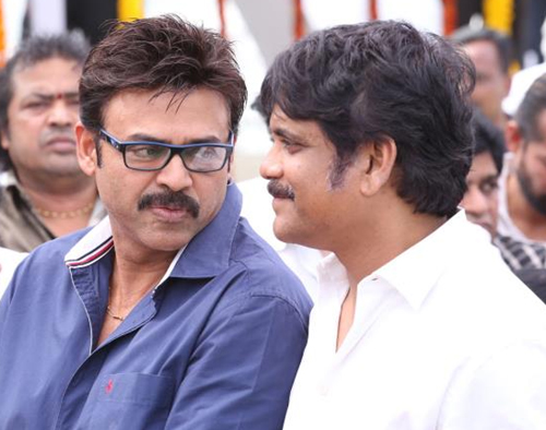Venkatesh Nagarjuna Multistarrer, Venkatesh Nag Multistarrer New Movie,Venkatesh Nagarjuna Movie News