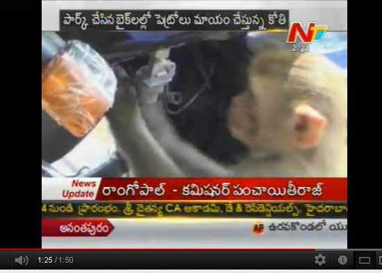monkey business, monkey business at warangal, petrol drinking monkey, warangal petrol drinking monkey, monkey drinking petrol, monkey drinking petrol in warangal