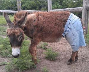 Funny Donkey SMS