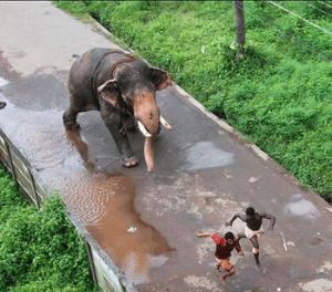 Funny Temple Run in India