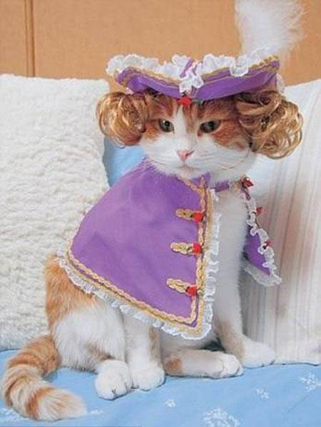 Animals wearing clothes - photo#3