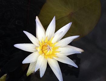 A really Pretty Flower