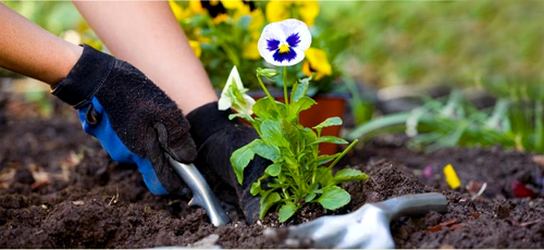 Tips And Tricks Of Gardening. | Home Gardening Tips | Simple ... Home Gardening Tips on home business tips, home projects, home security tips, photography tips, home decor tips, landscaping tips, home recycling tips, home remodeling tips, real estate tips, container gardening, home design tips, home fitness, parenting tips, gardening guides, home garden tips, home diy tips, home cleaning tips, home exercise tips, flower gardening, herb gardening, home safety tips, vertical gardening, organic gardening, home beauty tips, home sports, home theater tips,